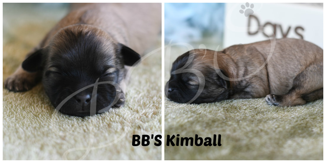 Puppies Available - BB's Canine Social Club
