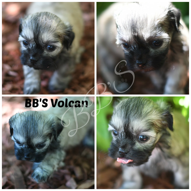 2019 Reserved Puppies - BB's Canine Social Club